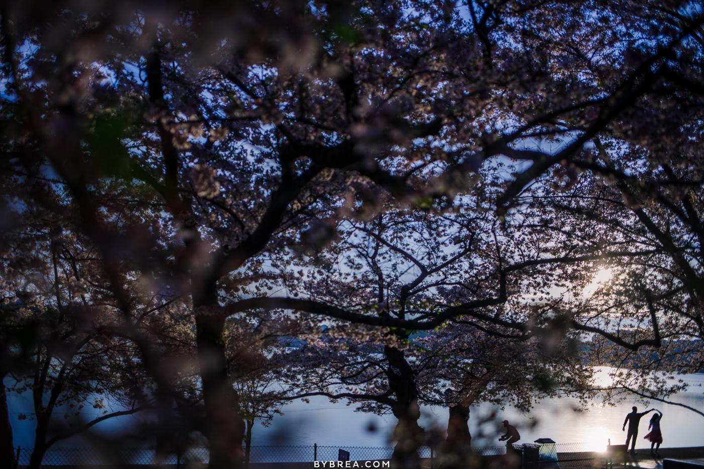 Sunrise engagement photo cherry blossom silhouette