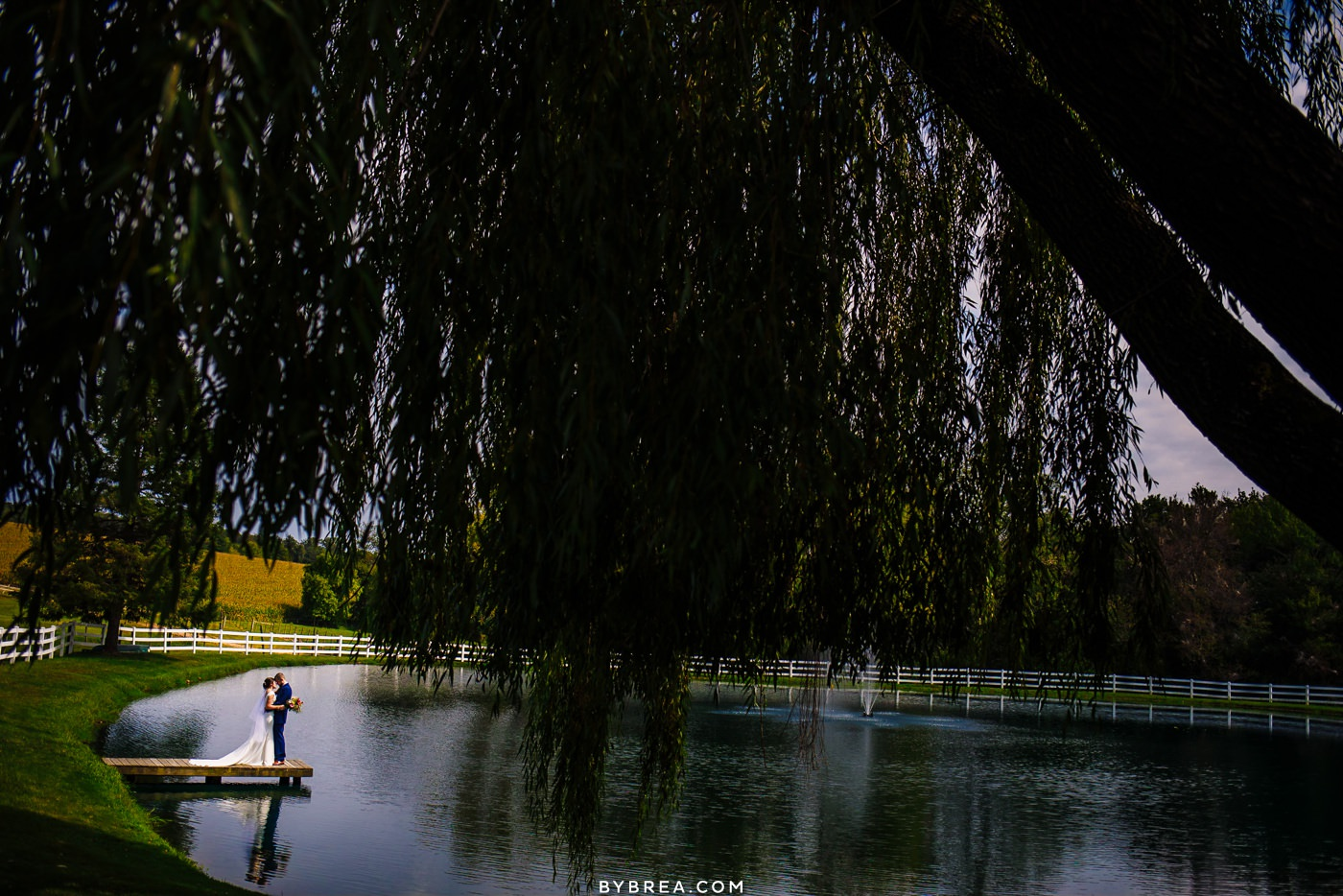 Bride and groom under willow tree at Pond View Farm